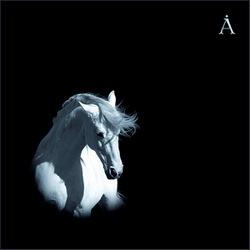Лошадь белая