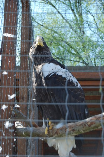 Орел - царь птиц