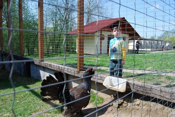 Матвей и фазан