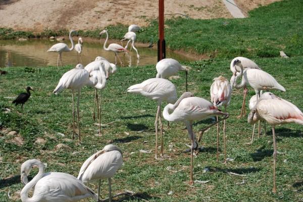 Фламинги!