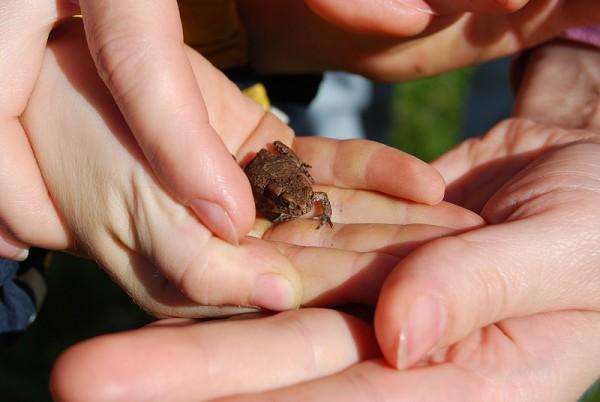 Поймали лягушку