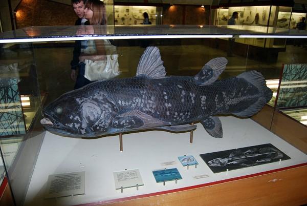 Рыбина