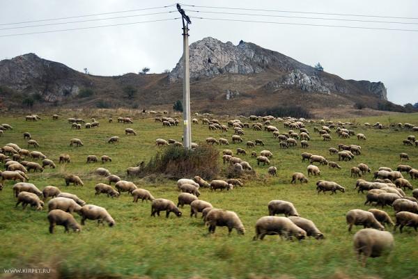 Словакия, овцы