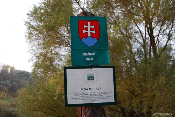 Нива Моравы