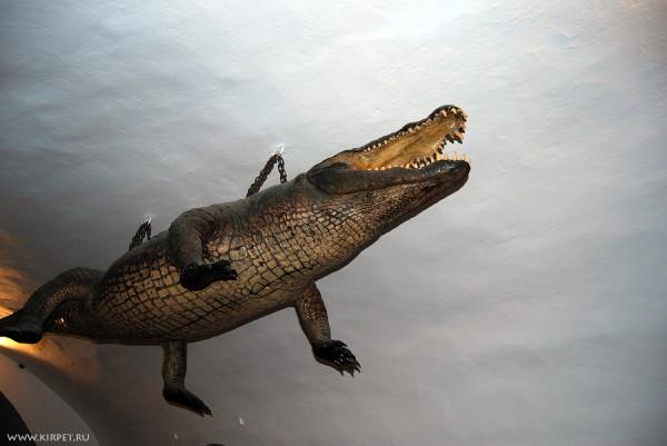Брненский дракон