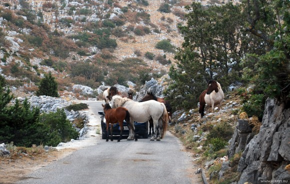 Лошади заблокировали поляка