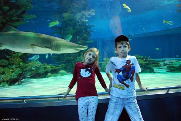 Дети с акулами