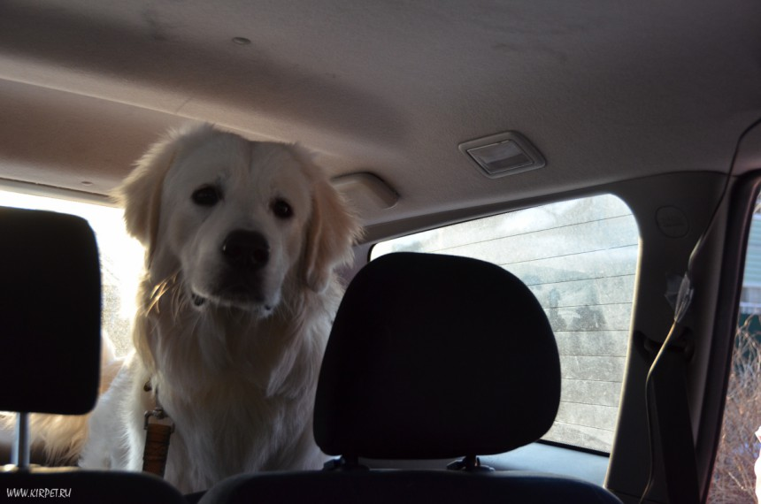 Флойд в машине всегда делает несчастную морду